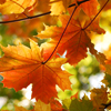 Une thérapie douce en au fil des saisons, mes conseils santé Prevention automne