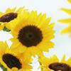 Une thérapie douce en au fil des saisons, mes conseils santé Prevention ete