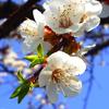 Une thérapie douce en au fil des saisons, mes conseils santé Prevention printemps